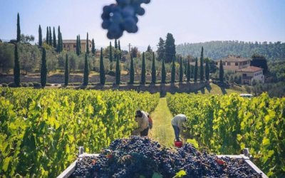 The New Wine Economy: a Game Changer for Winegrowers