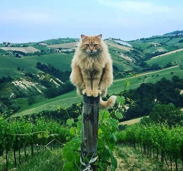 Un vigneron serein
