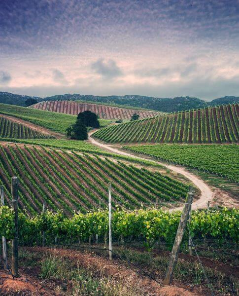 Should winegrowers be afraid of bad weather?